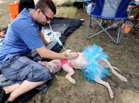 Event offers low-cost care, adoptions, animal advocacy