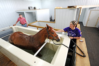 Father-daughter team prepares show animals for ring at ranch