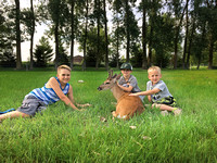 Families fawned over domesticated deer