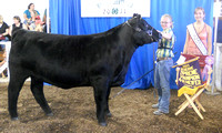 Photo Gallery 1: 4-H Beef Show