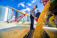 Farmers - Summer storms took toll on corn crop