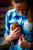 Poultry return after bird flu sparked ban