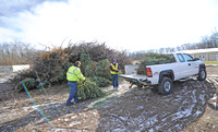 Christmas trees on the chopping block