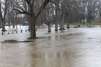 Soggy winter leaves park flooded